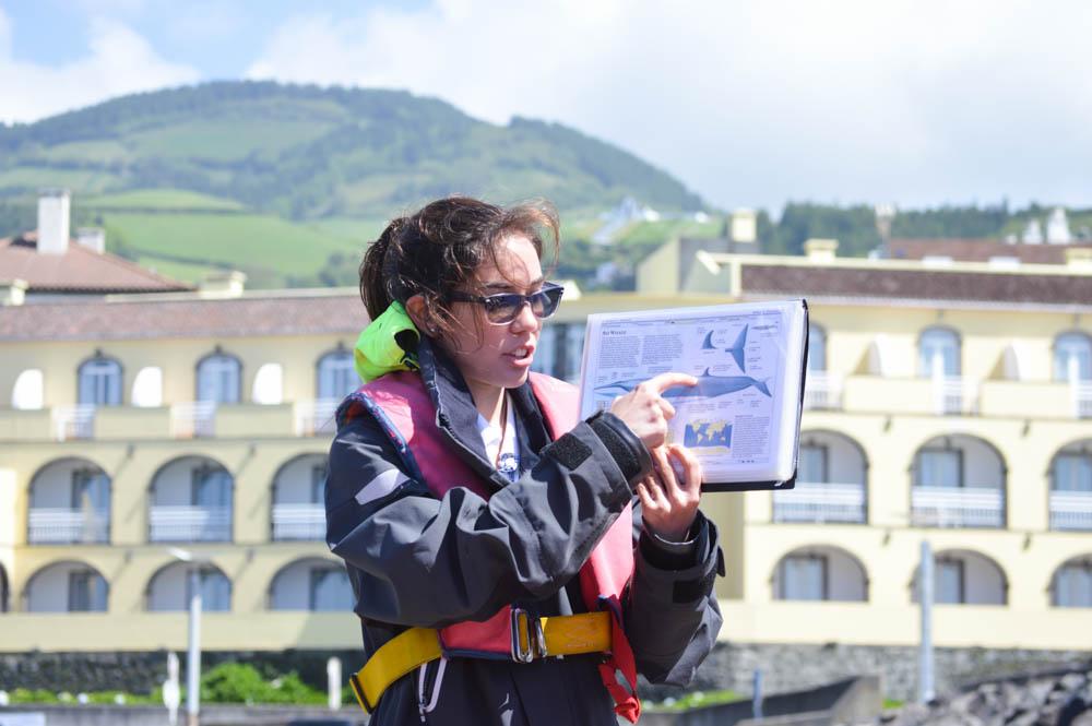 Dolfijnen en walvissen spotten, São Miguel, Azoren