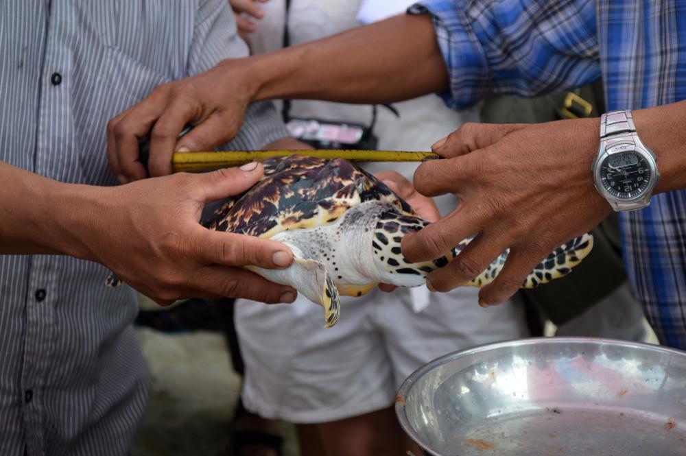 Het opmeten van de schildpad