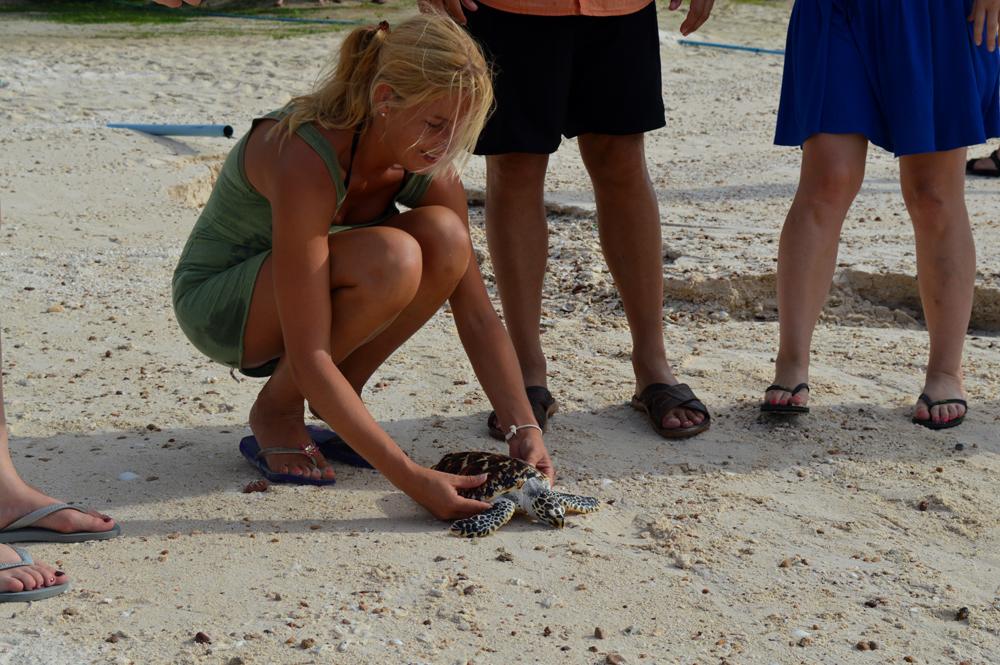 Schildpad vrijlaten - Koh Talu