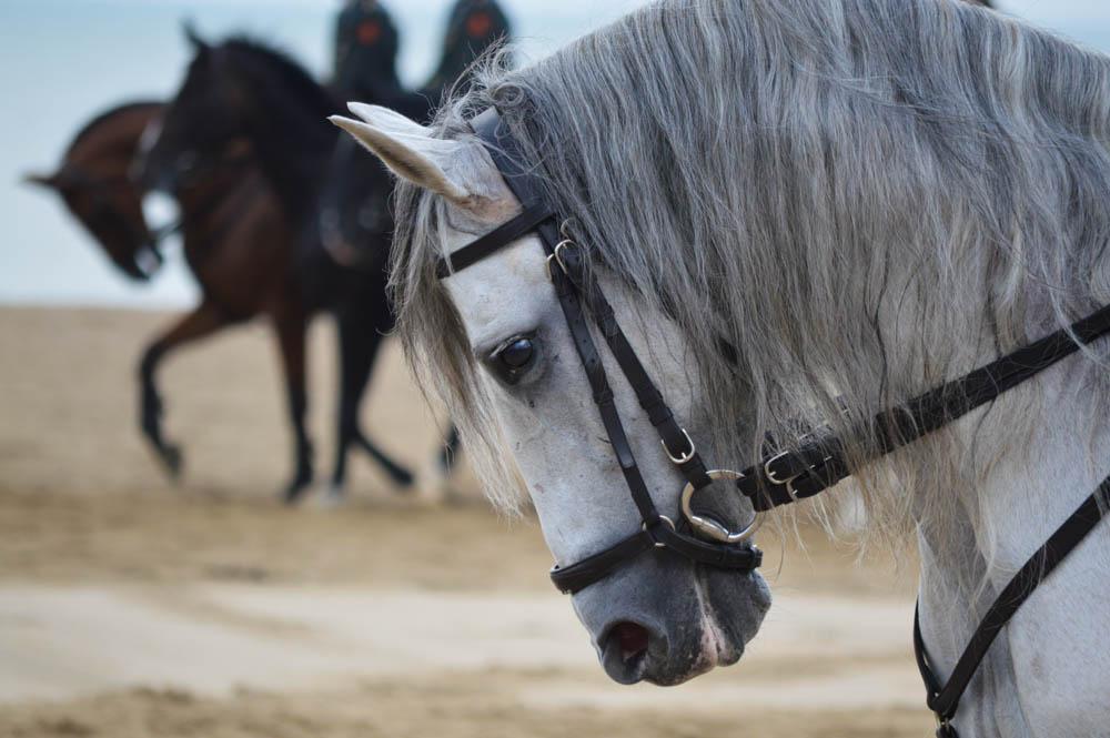 Een van de mooiste paarden in de Ere-Escorte