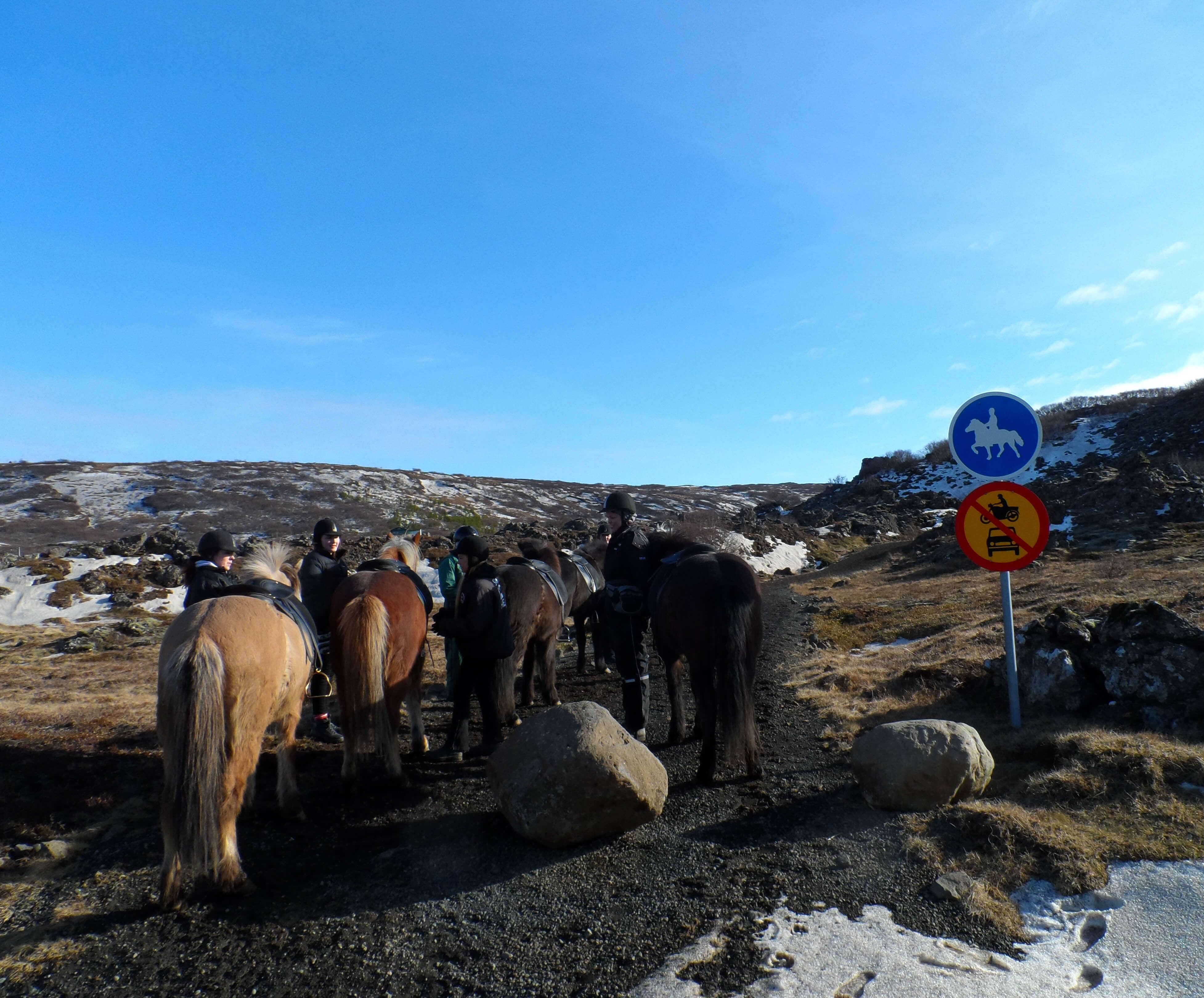 Waar paardrijden in IJsland
