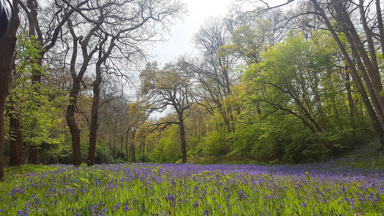 Wandelen Park Sorghvliet en het Hyacinten bos