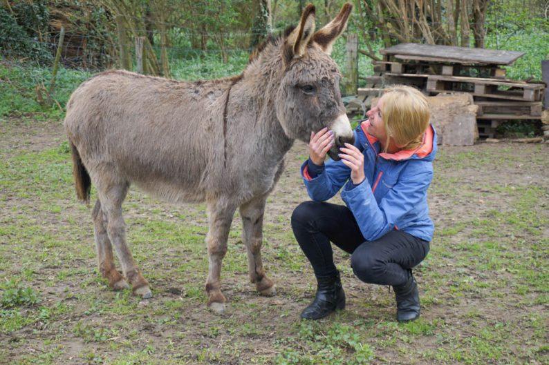 Wandelen met ezels in Limburg