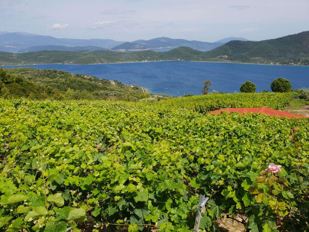 Wijn proeven in Noord-Evia