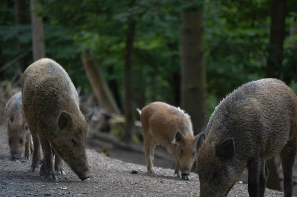 Wild- & Erlebnispark Daun - Vulkaneifel