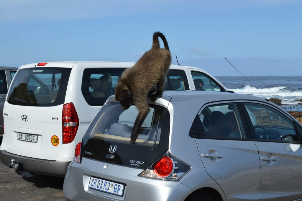 Beste categorie autohuur in Zuid-Afrika