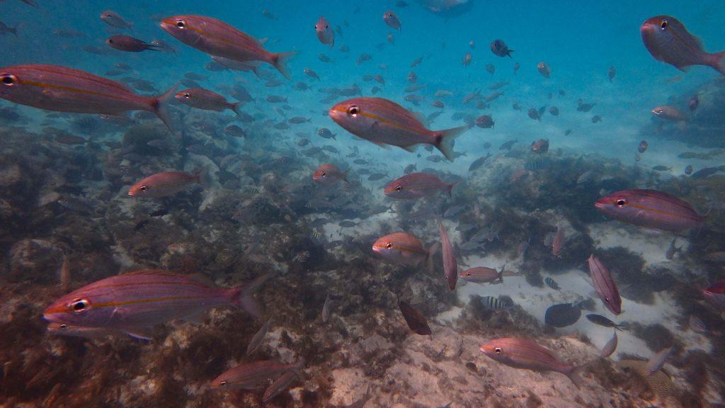 Beste snorkelplekken Aruba