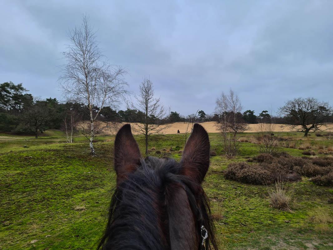 Paardrijden op Shire - Buitenrit in Brabant