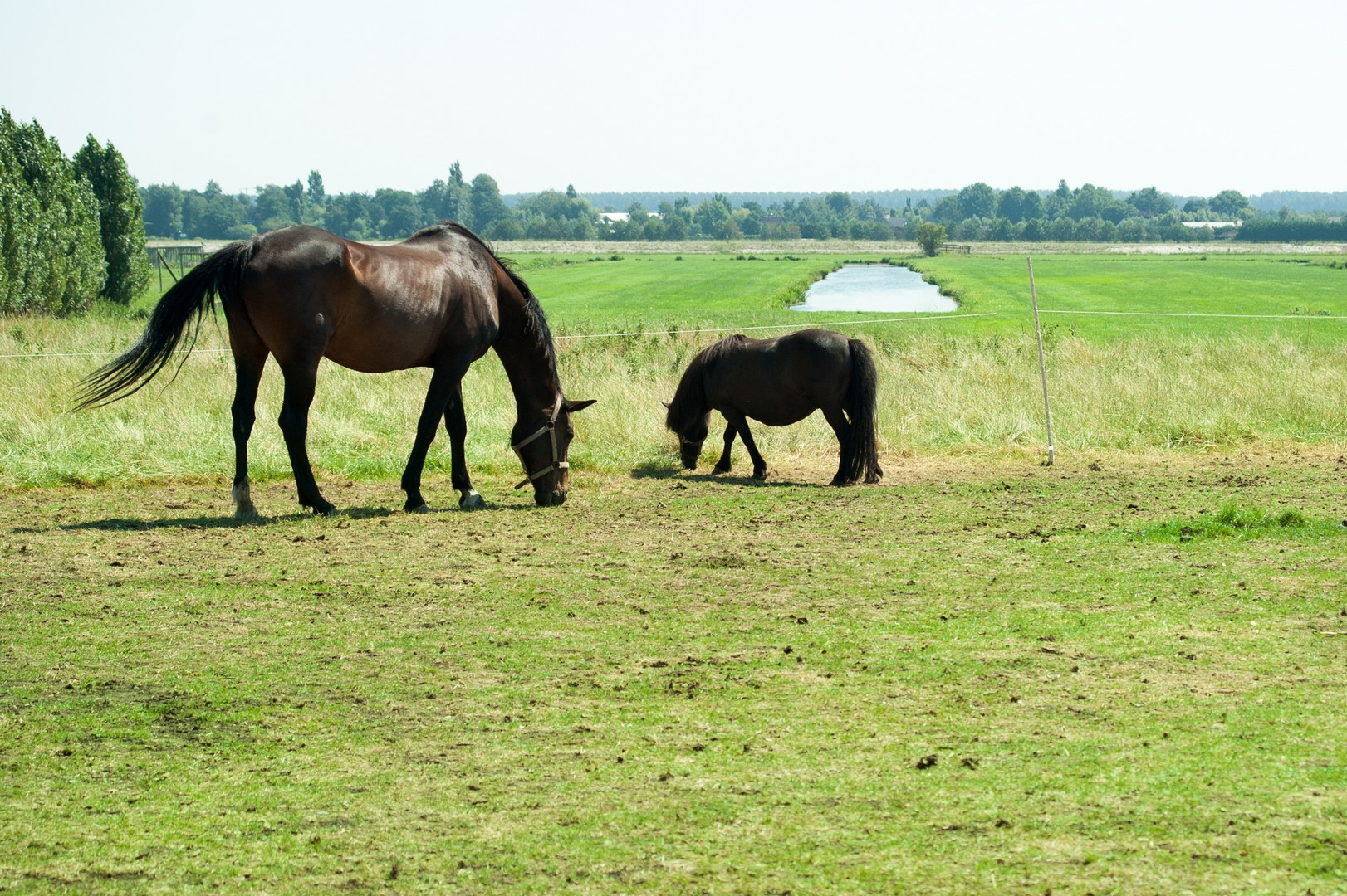 Logeren bij de boer met paarden Groene Hart