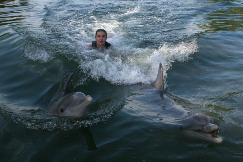 Zwemmen met dolfijnen - Key Largo