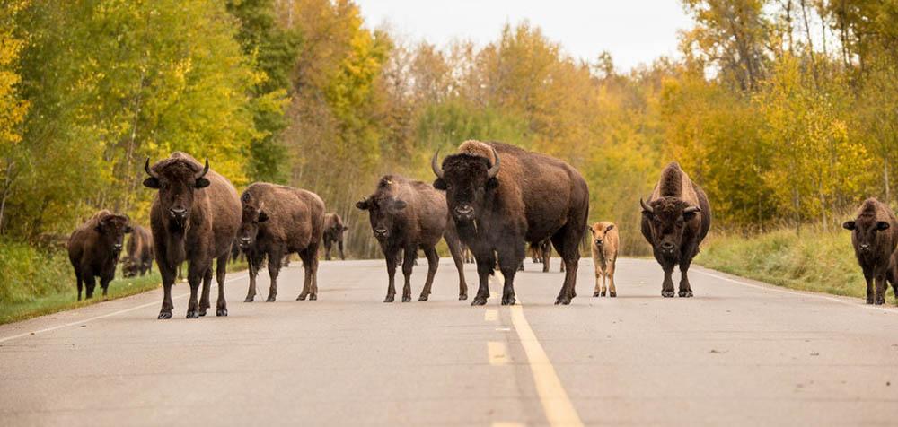 Nationaal Park, Elk Island