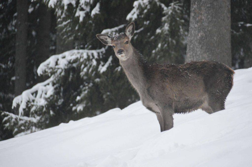 Wilde dieren in Thumarsbach