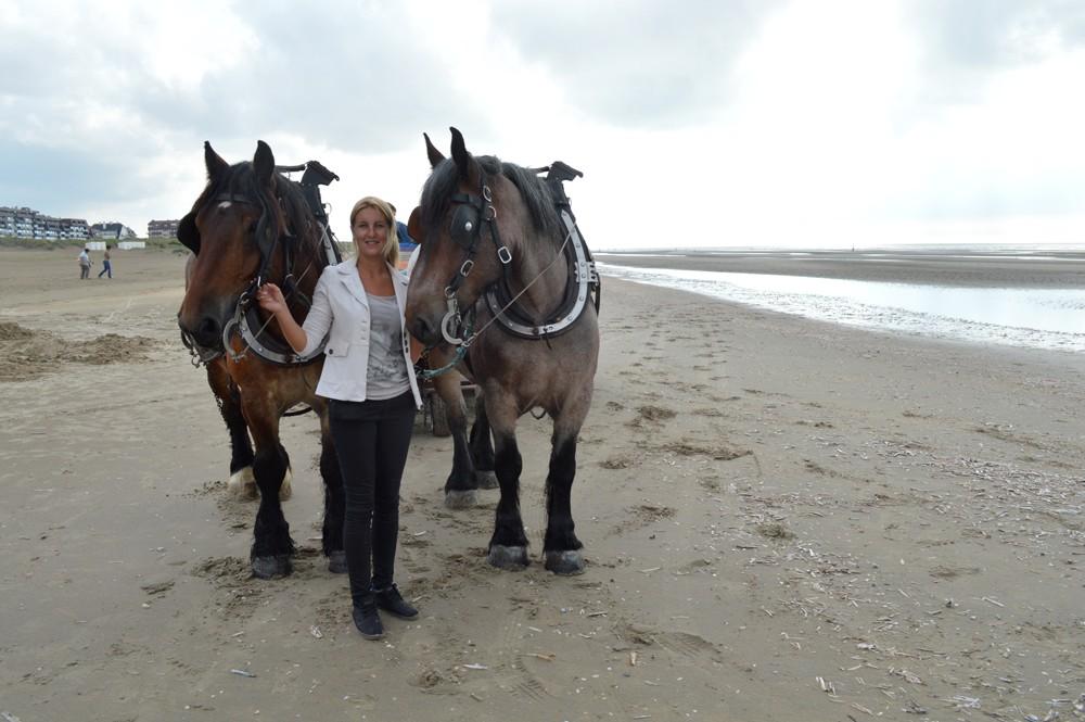 Met de paarden van Johan