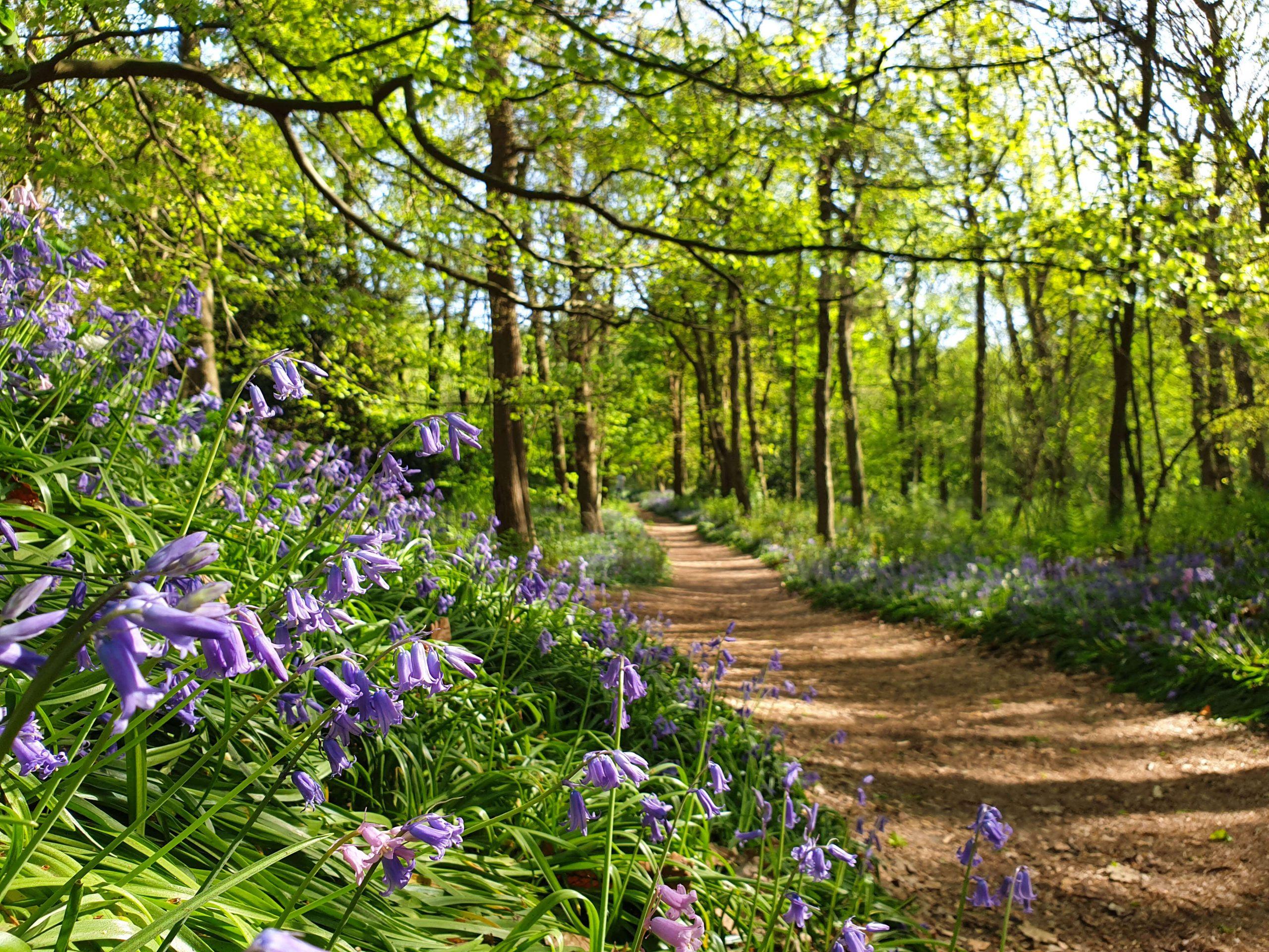 Landgoed Ockenburgh hyacinten bos