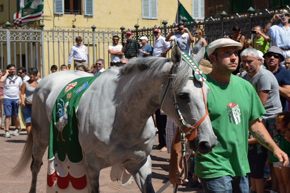 Inzegening paard in de contrada Oca, ganzenwijk