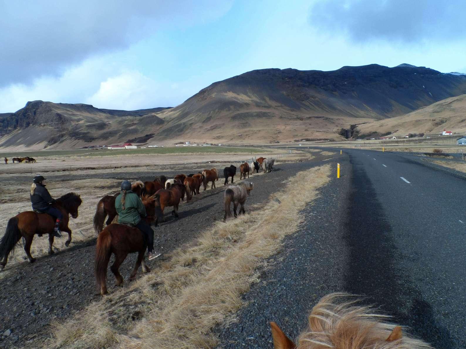 Paarden drijven