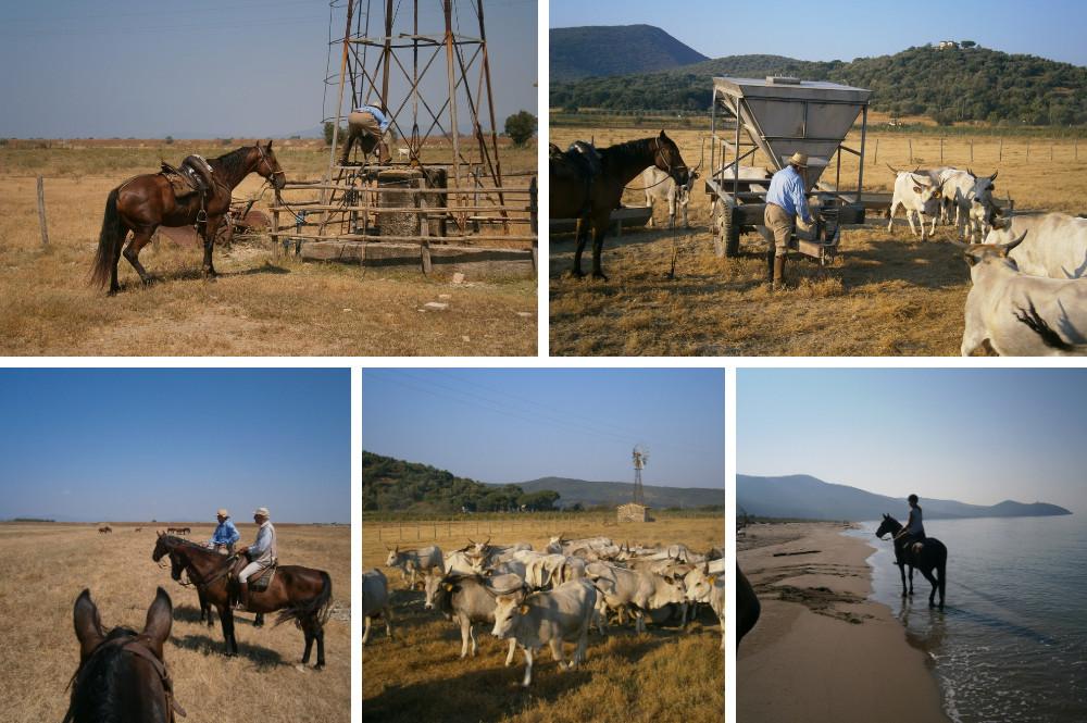 Paardrijden met Butteri, Toscaanse Cowboys