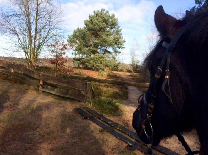 Paardrijden in het Duitse grensgebied Dreiländersee
