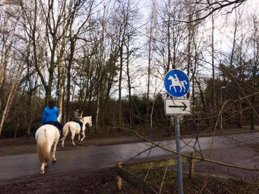 Paardrijden op reis