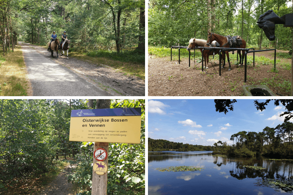 Paardrijden in Oisterwijkse bossen en vennen