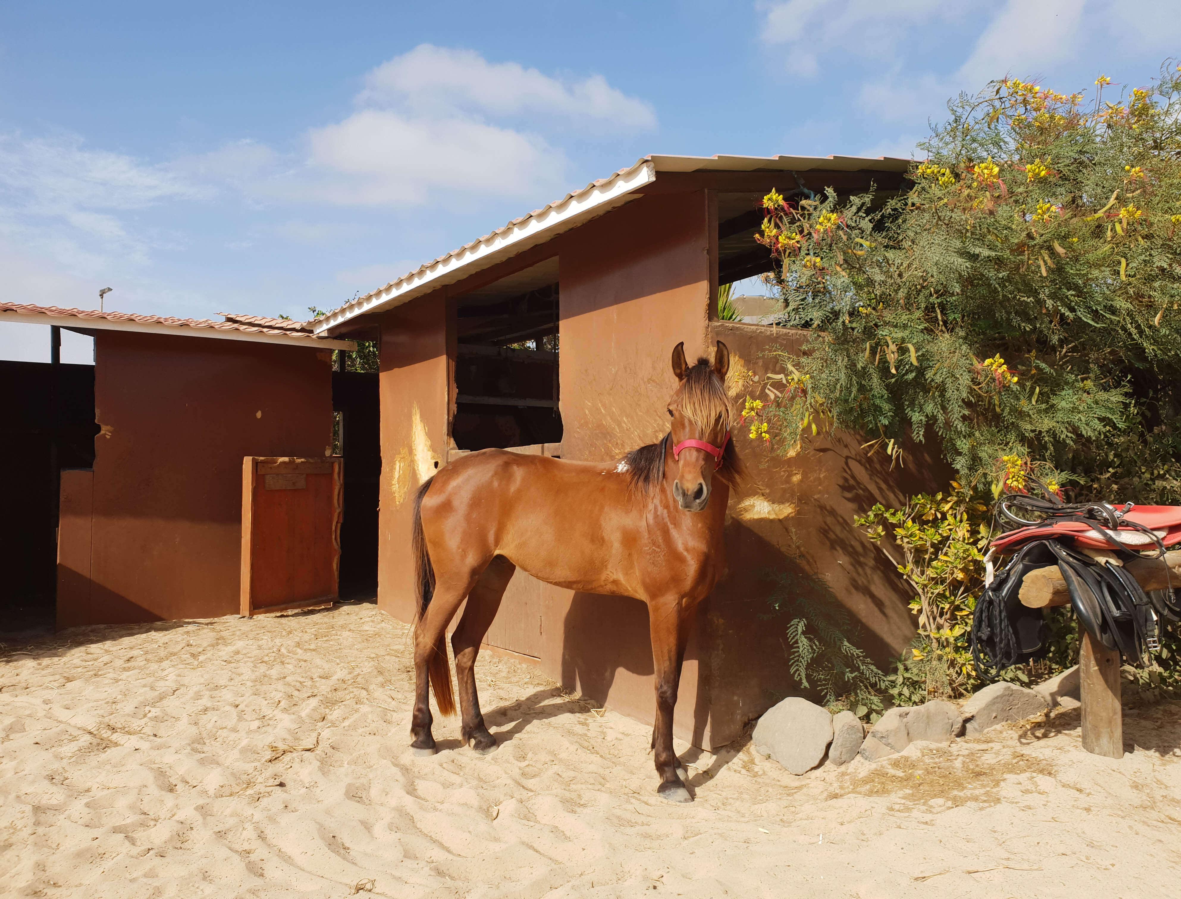 Paardrijden - Sal - Kaapverdie