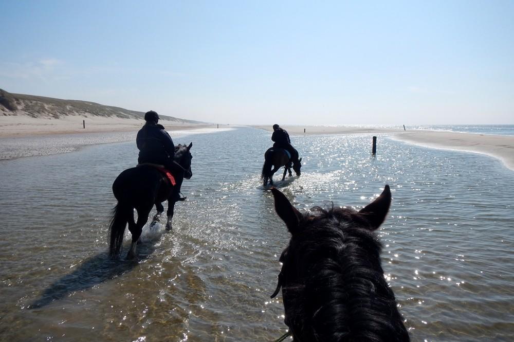 Paardrijden aan zee