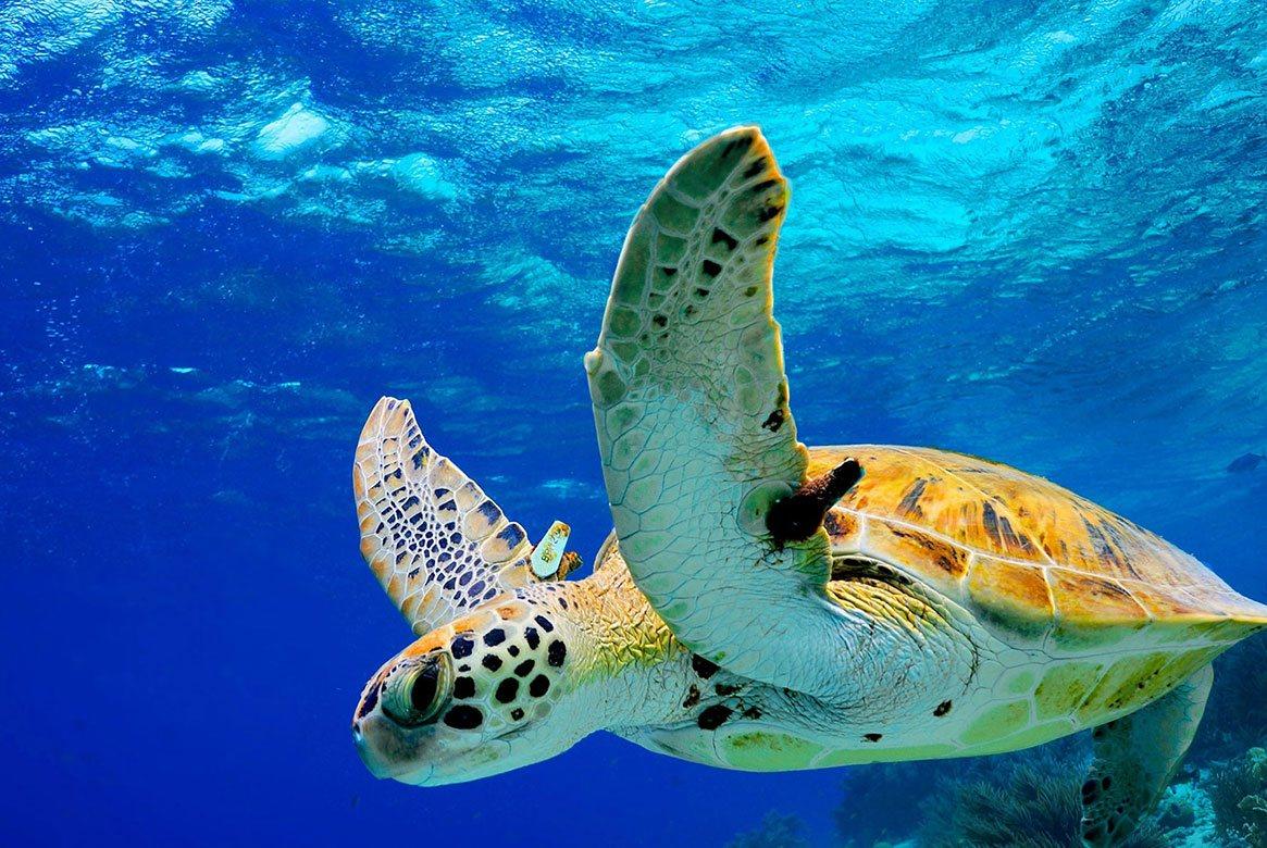 Zeeschildpadden spotten op Bonaire