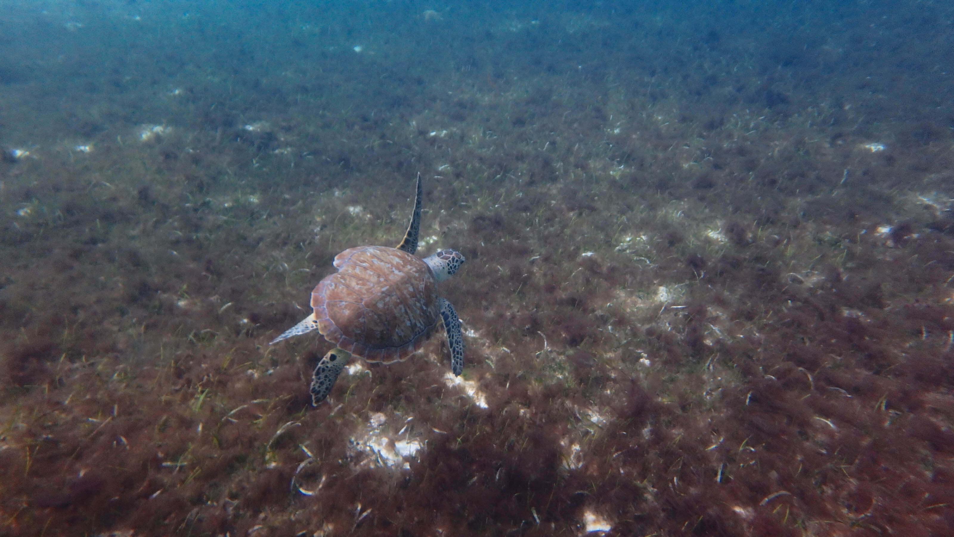 Reistips Aruba