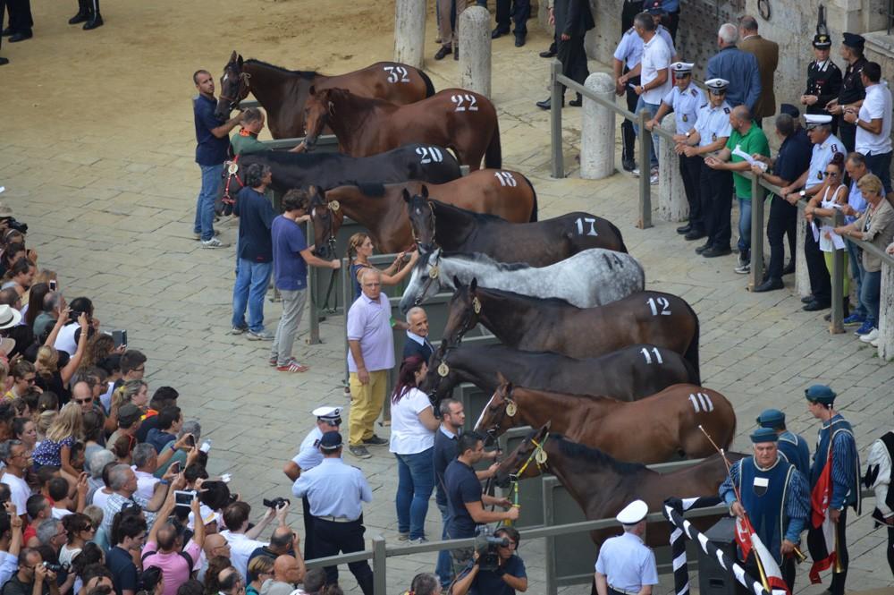 De selectie van de 10 paarden