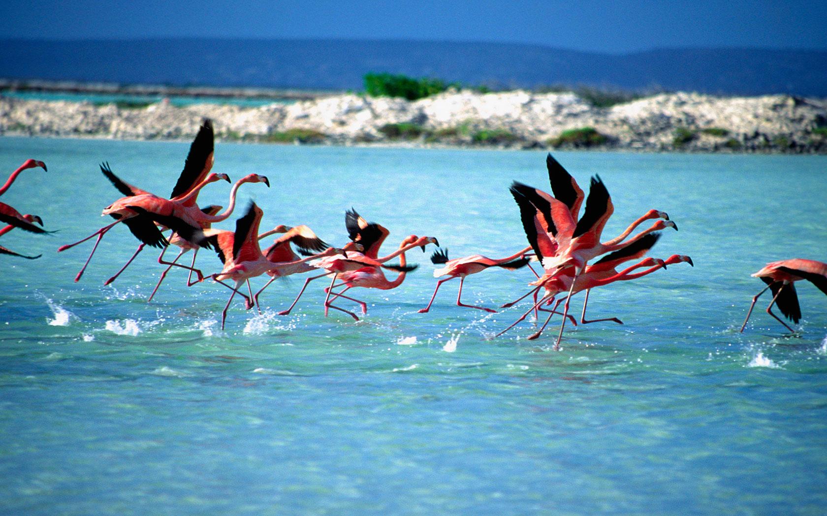 Wilde flamingo's spotten