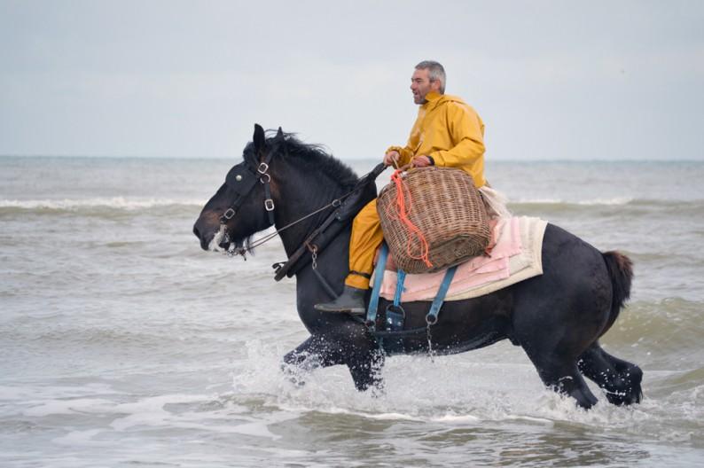 Garnaalvissers te paard