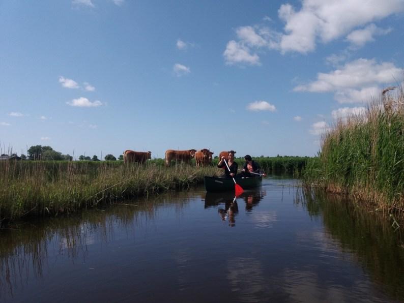 Safari in Nederland